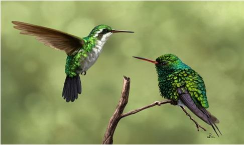 Emeraude de canivet - Signification des plumes d oiseaux ...